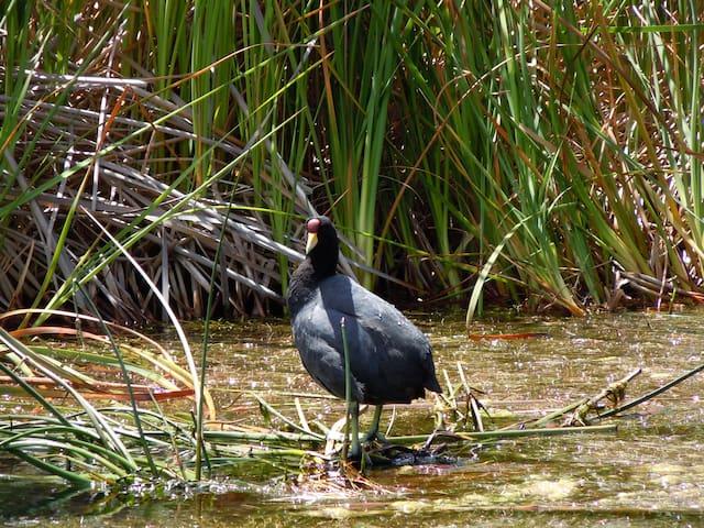 Flora and fauna at Cuicocha Lagoon