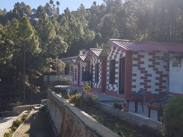 Pine forest resort