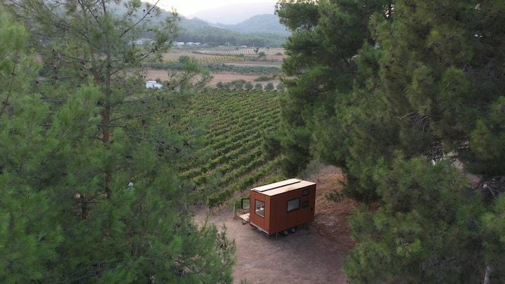 Şarap Üretilen Üzüm Bağlarında Tiny House Deneyimi