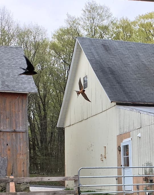 The entry and beautiful barn swallows