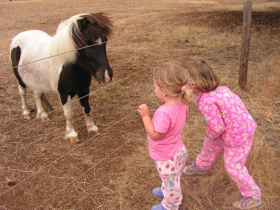 Our mini pony