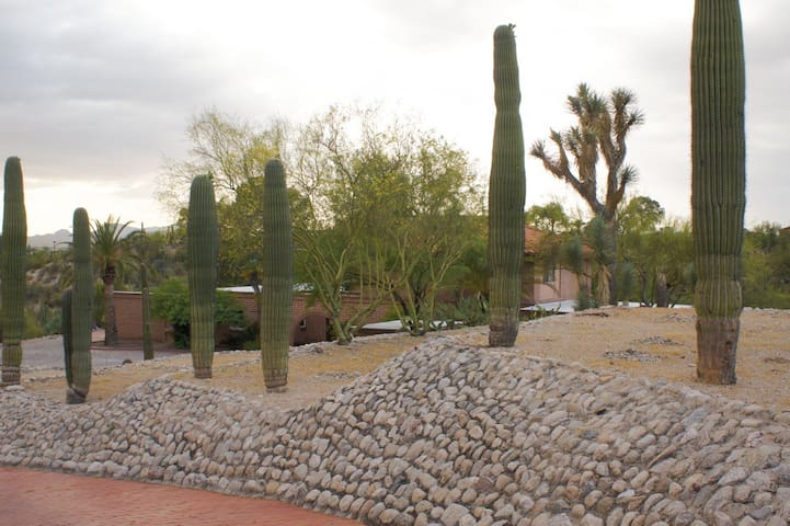This is the view from the other side of the driveway. The saguaro cactus are magnificent.