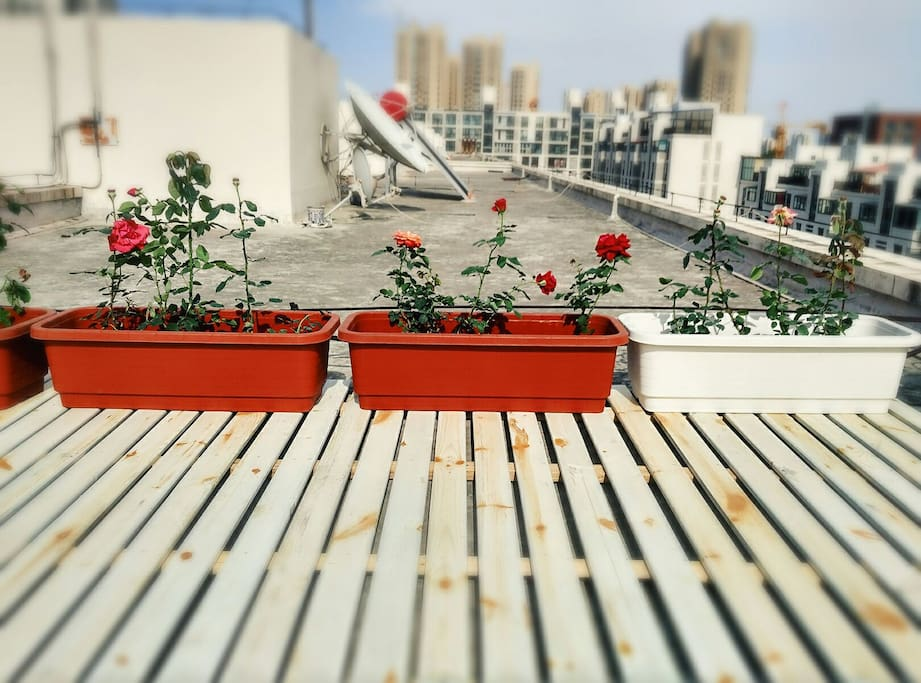 roof garden at apartment