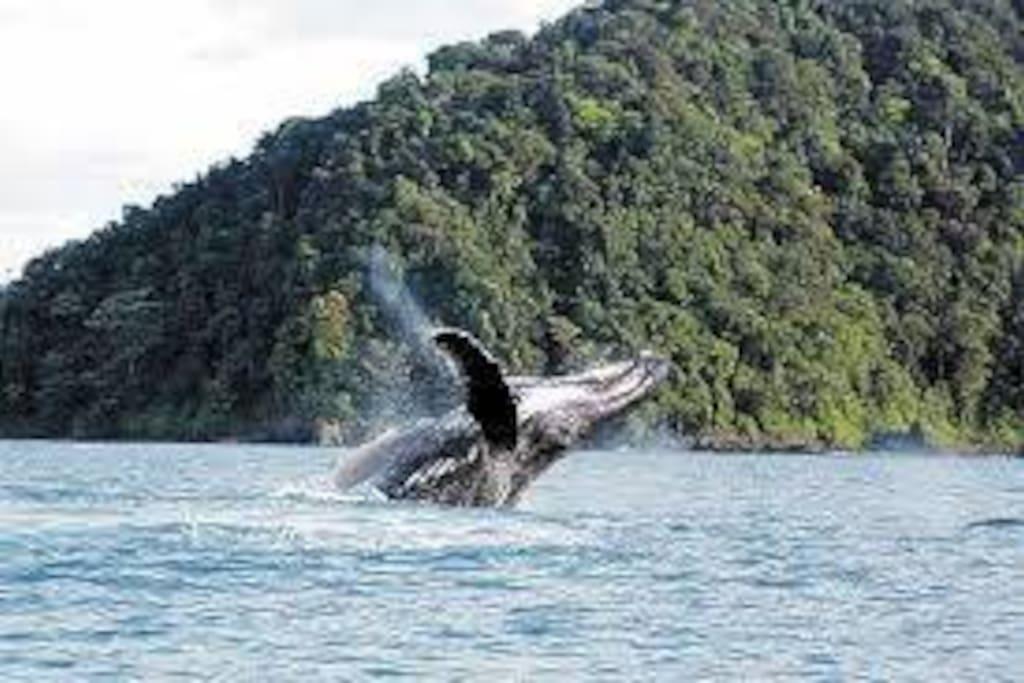 Ballenas en el pasifico