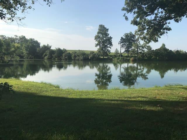 15 pet ducks live on the lake.