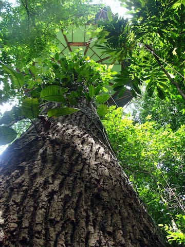 Nature Observatorio Treehouse tours - Manzanillo - Baumhaus