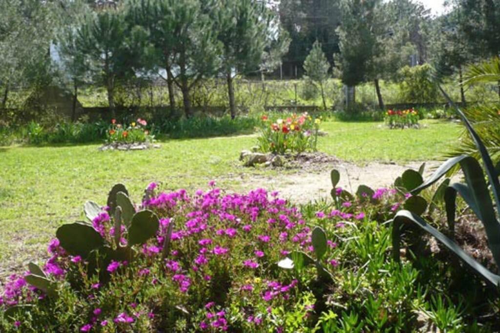 Le jardin du Mas
