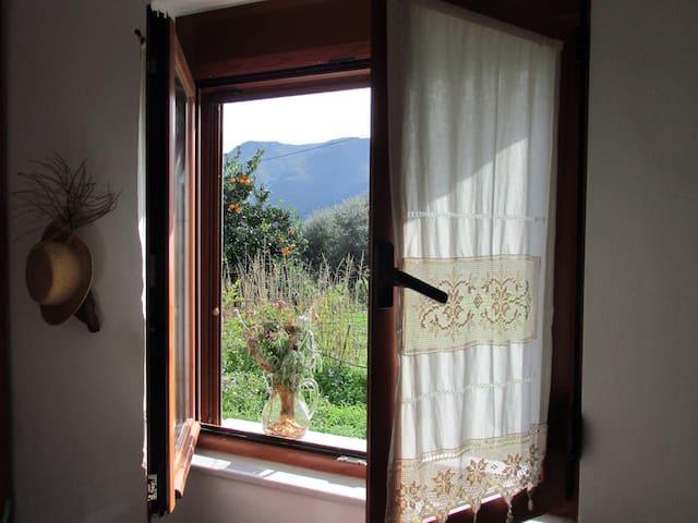 Blick aus dem Fenster auf Orangen- und Granatapfelbaum.
