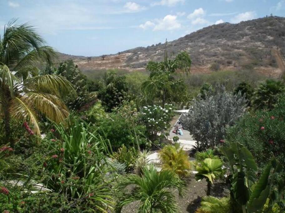 Aussicht über den Garten / Garden View
