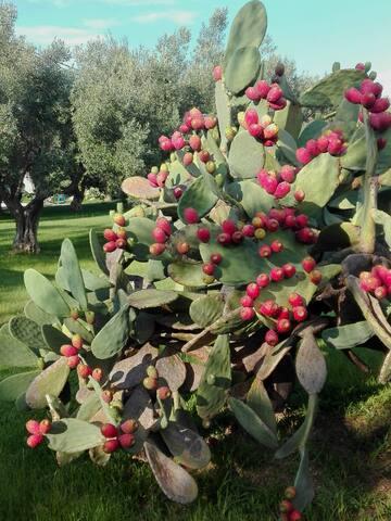 Villa Augusta garden details