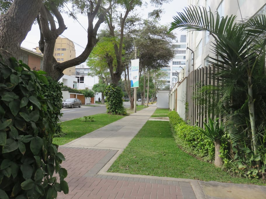Tree-lined street close to Museo Amano