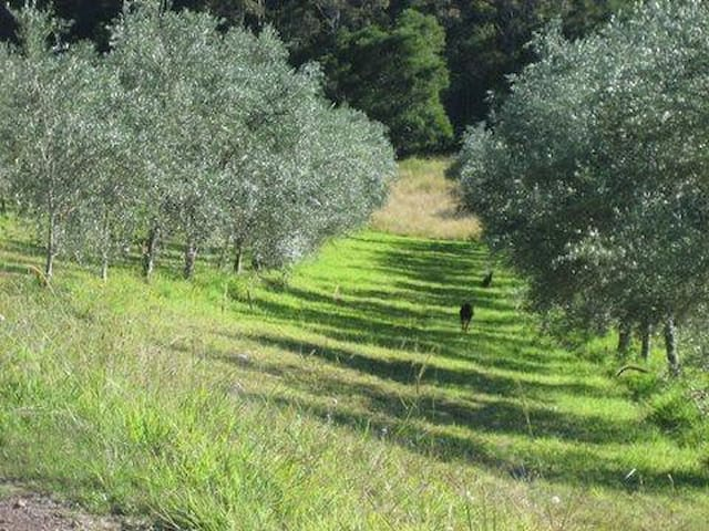 23 acre olive farm- Pencil Creek - Mapleton