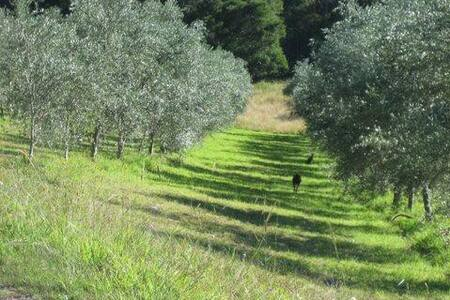 23 acre olive farm- Pencil Creek - Mapleton - 一軒家