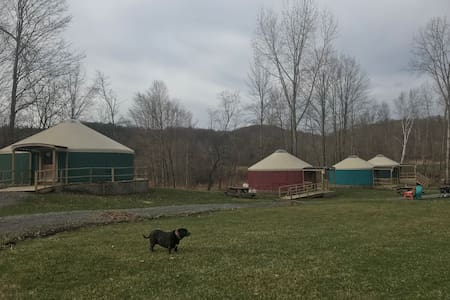 Grist Mill Camp's Gorgeous Group Yurt