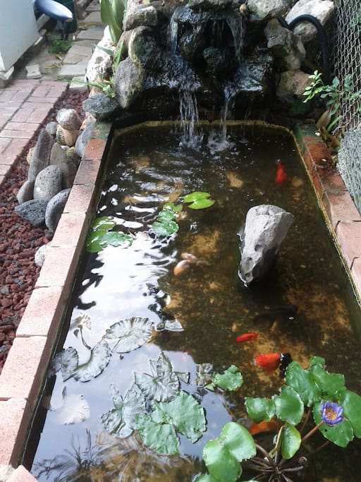 fish pond in the back yard
