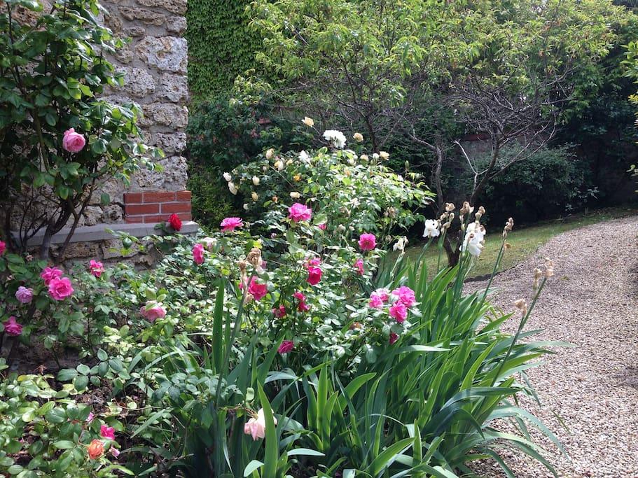 Nice garden at spring