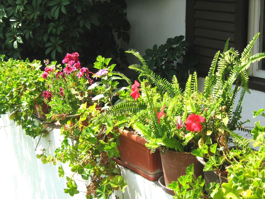 Pleasant atmosphere on the terrace, with the scent of bloomed flowers