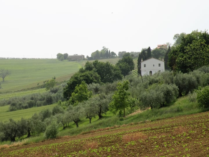 Oliveto Traditional Umbrian Farmhouse