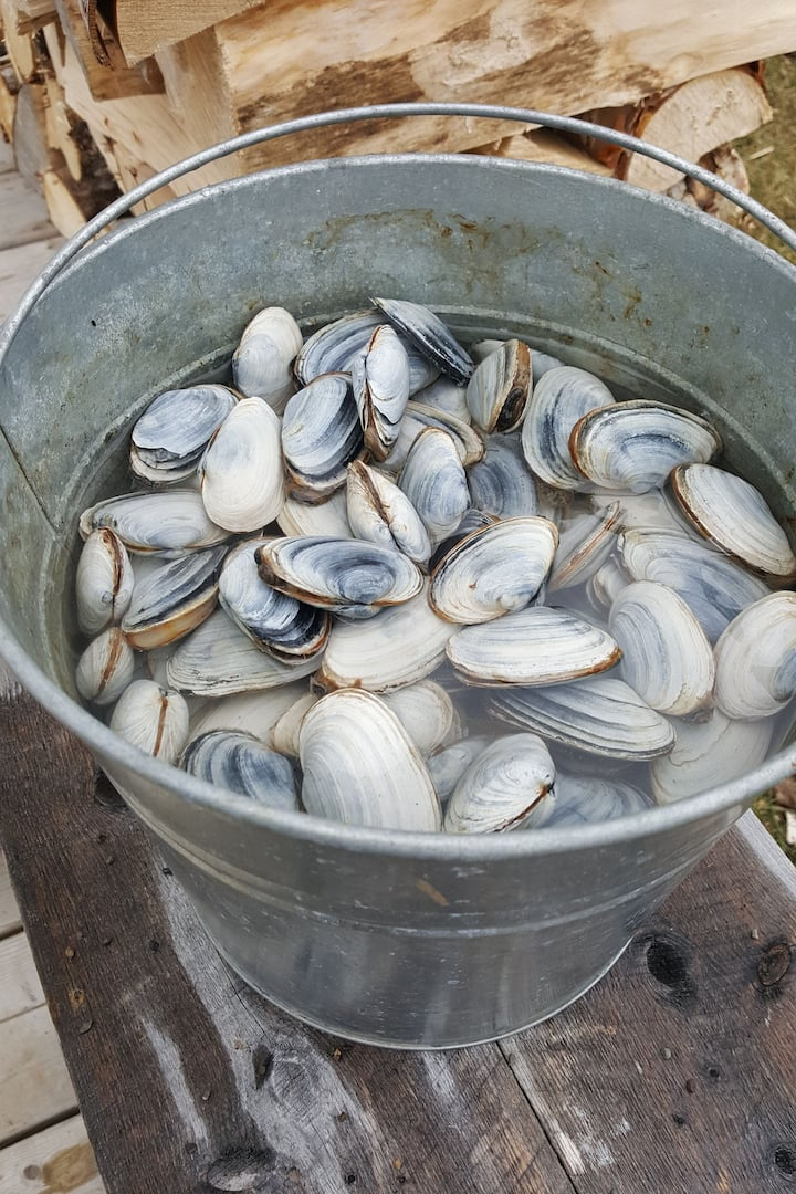 Bucket of fresh clams