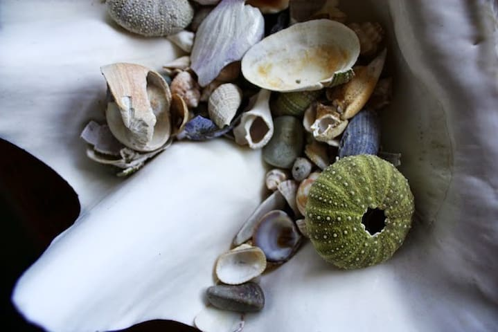 Shell Room at The Bluff House Inn