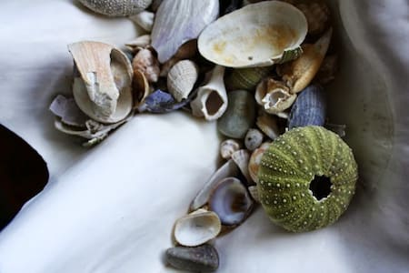 Shell Room at The Bluff House Inn - Gouldsboro - Bed & Breakfast