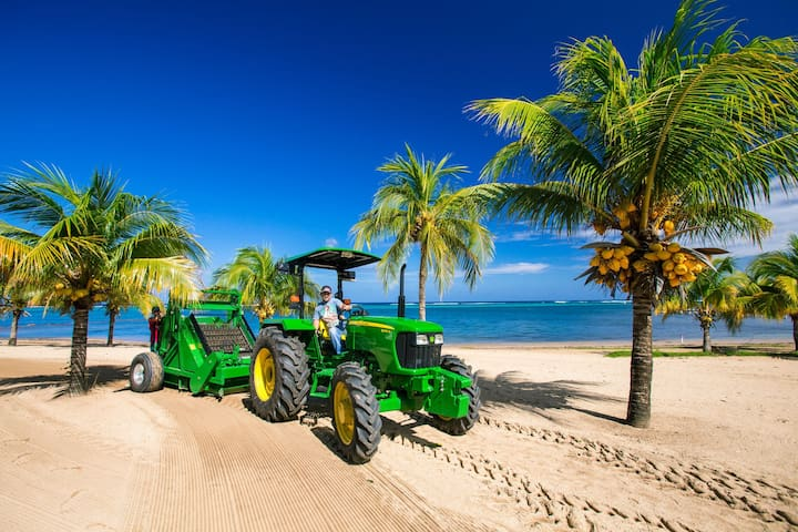 Beach Grooming done by professional equipment insures clean and fluffy sand with the least possible sand flies.