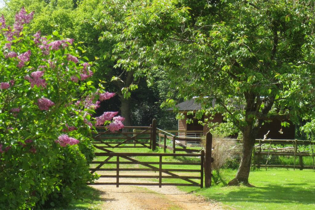 View from the front door from where you can watch our pony and goat grazing.