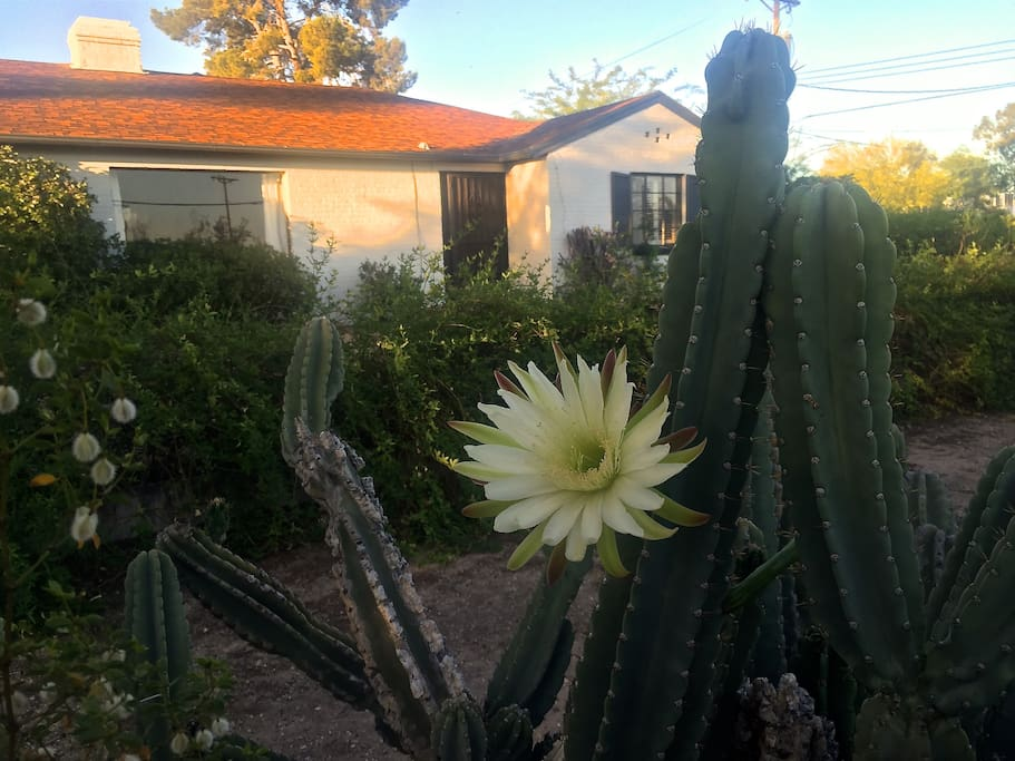 Night-Blooming Cereus and the front entrance.