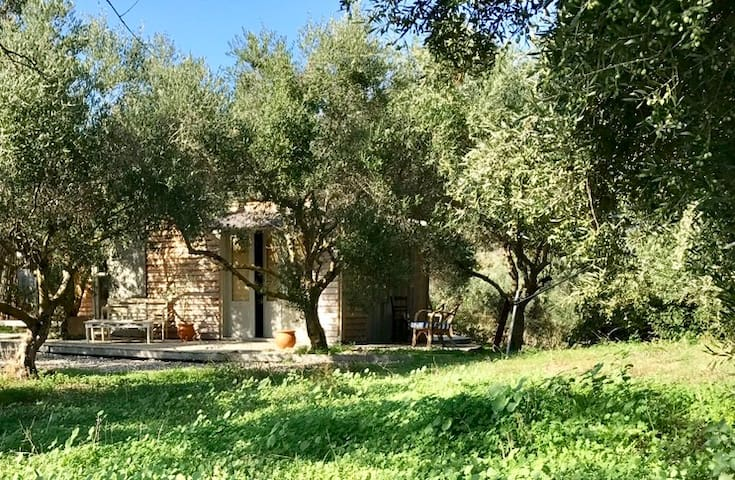 The Olive Shed..off-grid amongst the Olive Trees