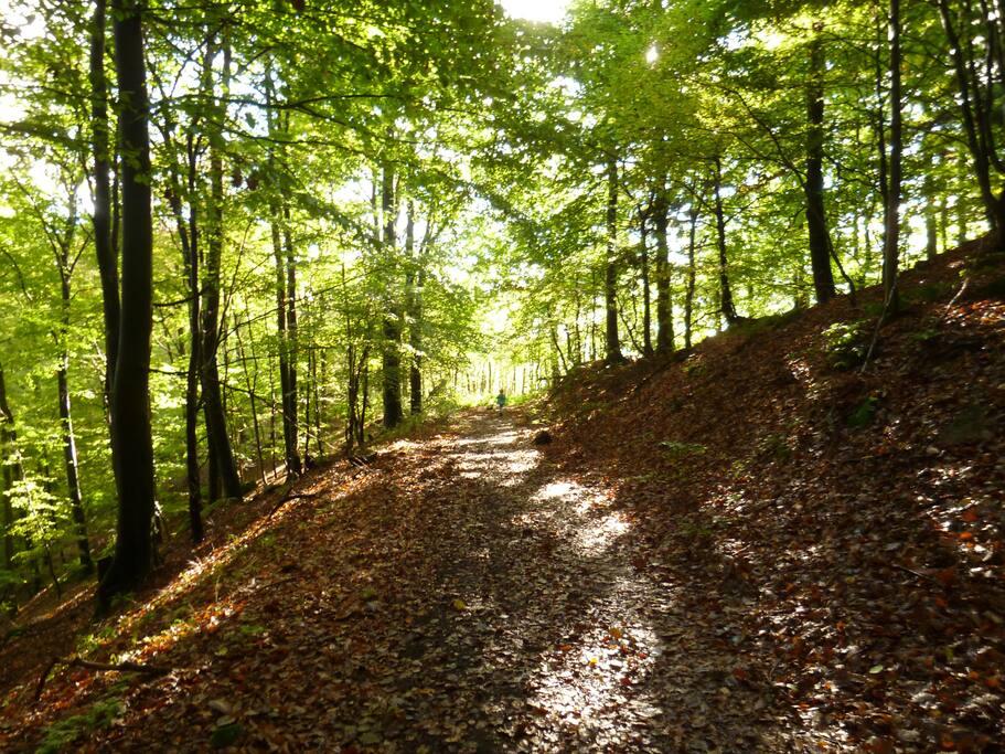 Wandern in der Umgebung (Hiking in the surroudings)