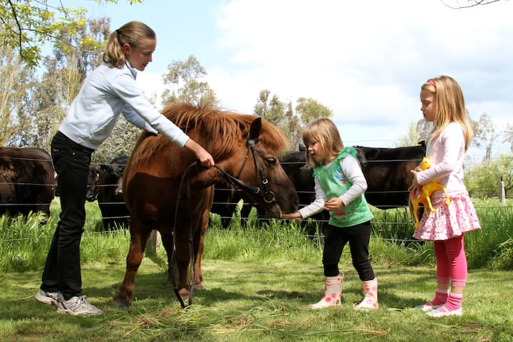 Bo the shetland pony & friends