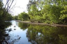 Tumut River at Ribbonwood
