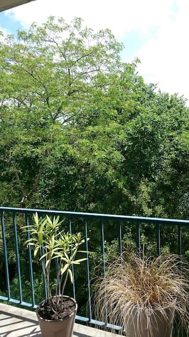 Vue du balcon (l'été)