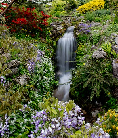 Clyne Gardens in May-the Japanese Garden.