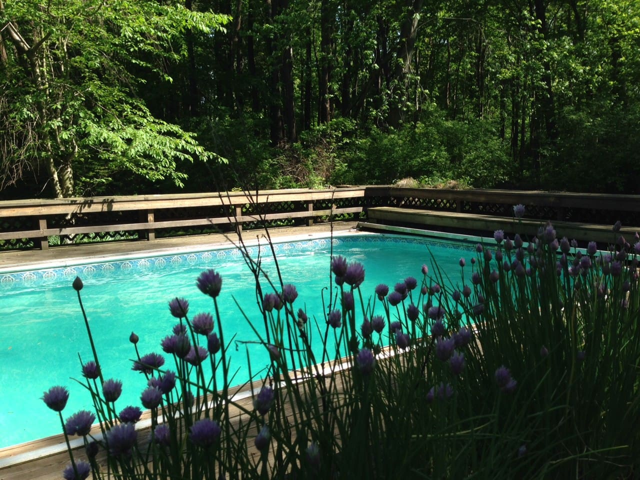 Enjoy your own private pool surrounded by natural plants and trees.