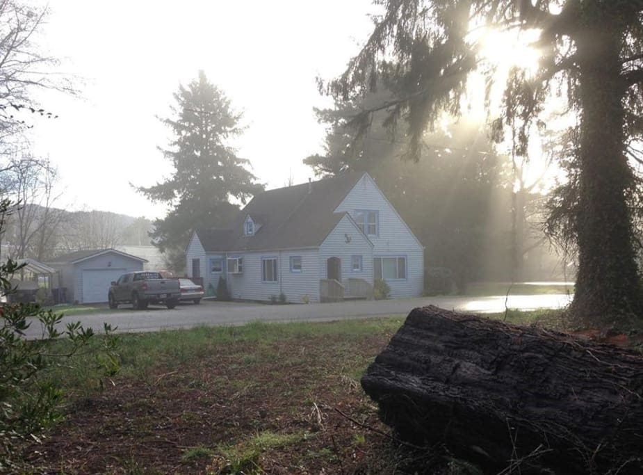 It's especially cozy on a misty morning! A short walk on a path through these trees, & you are on the Siletz Bay Beach!