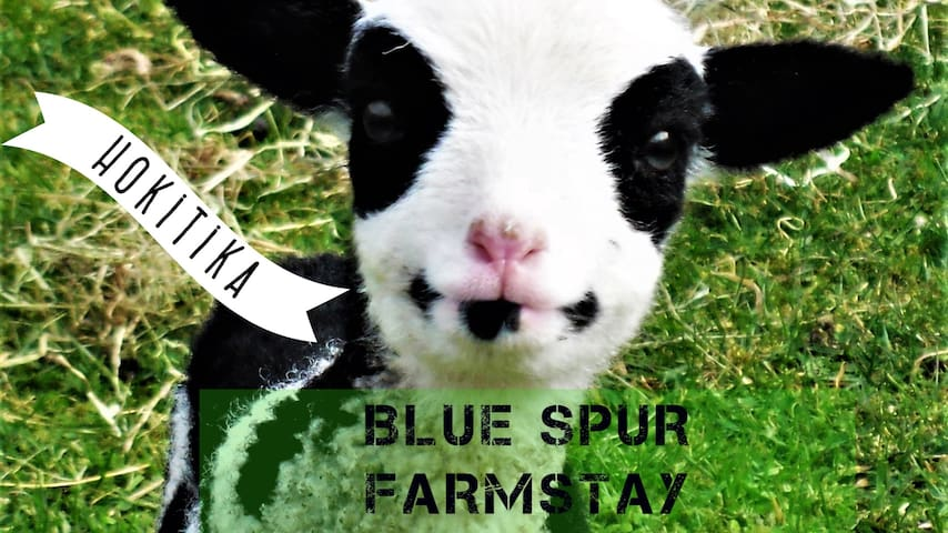 Stay on a farm!  Blue Spur Eco Farmstay Hokitika