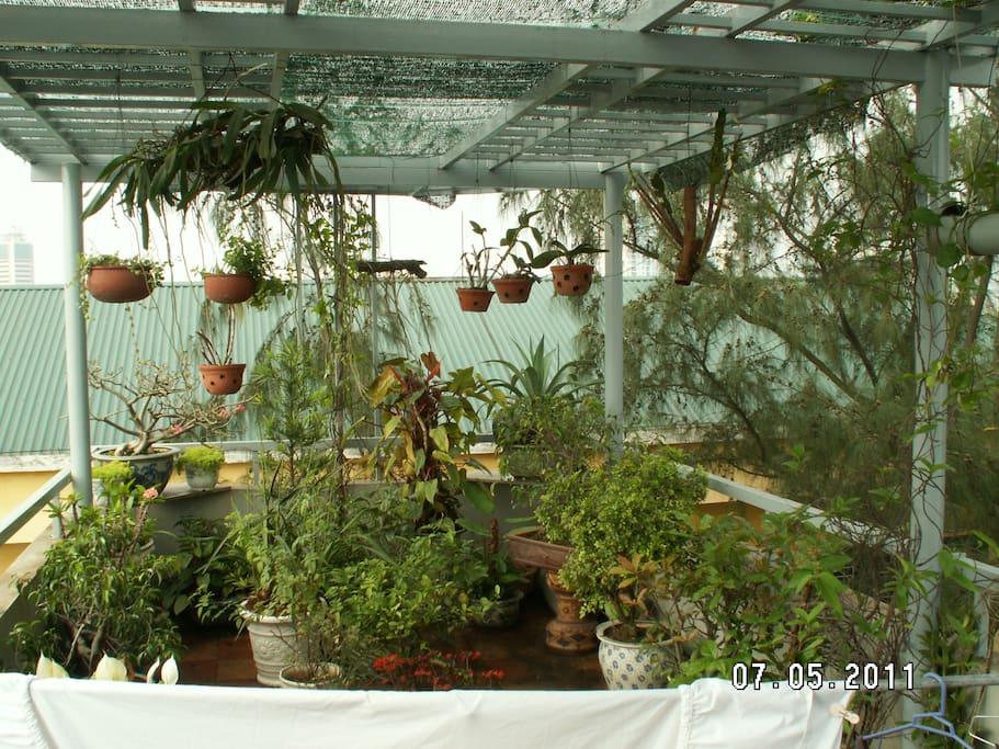 Garden in the rooftop