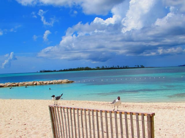 Incredible Location! Beaches, Pool & City Centre - Nassau - Appartement