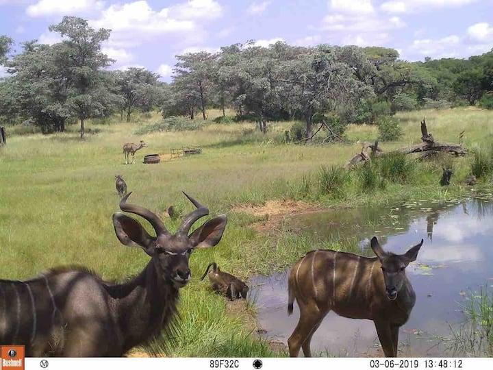 Leeuwkloof: Bushveld getaway  45 min from Pretoria