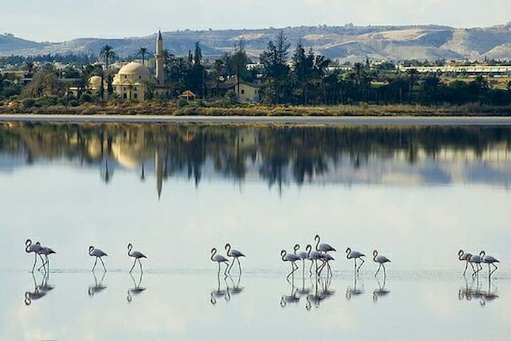 The salt Lake with the mosque behind and flamingoes in front