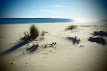 the beach - surroundings