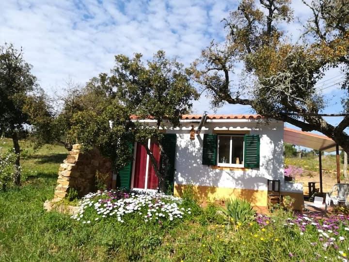 Isabela's cozy house