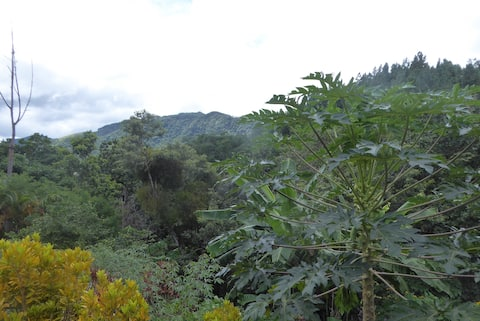 Mountain's Beauty