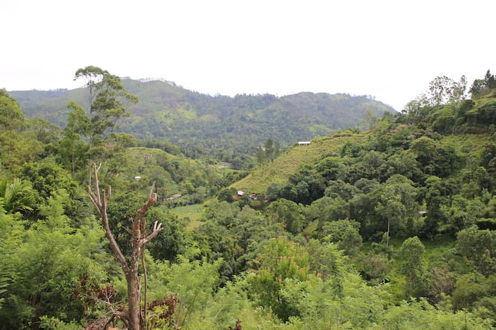 Green Lushy Home Stay with Beautiful Green View