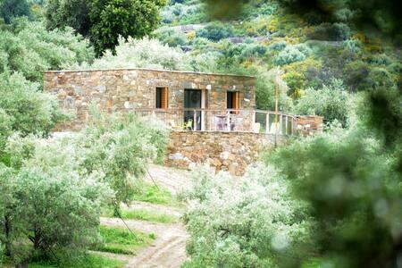 Magnifique pailler Corse au cœur d'une oliveraie