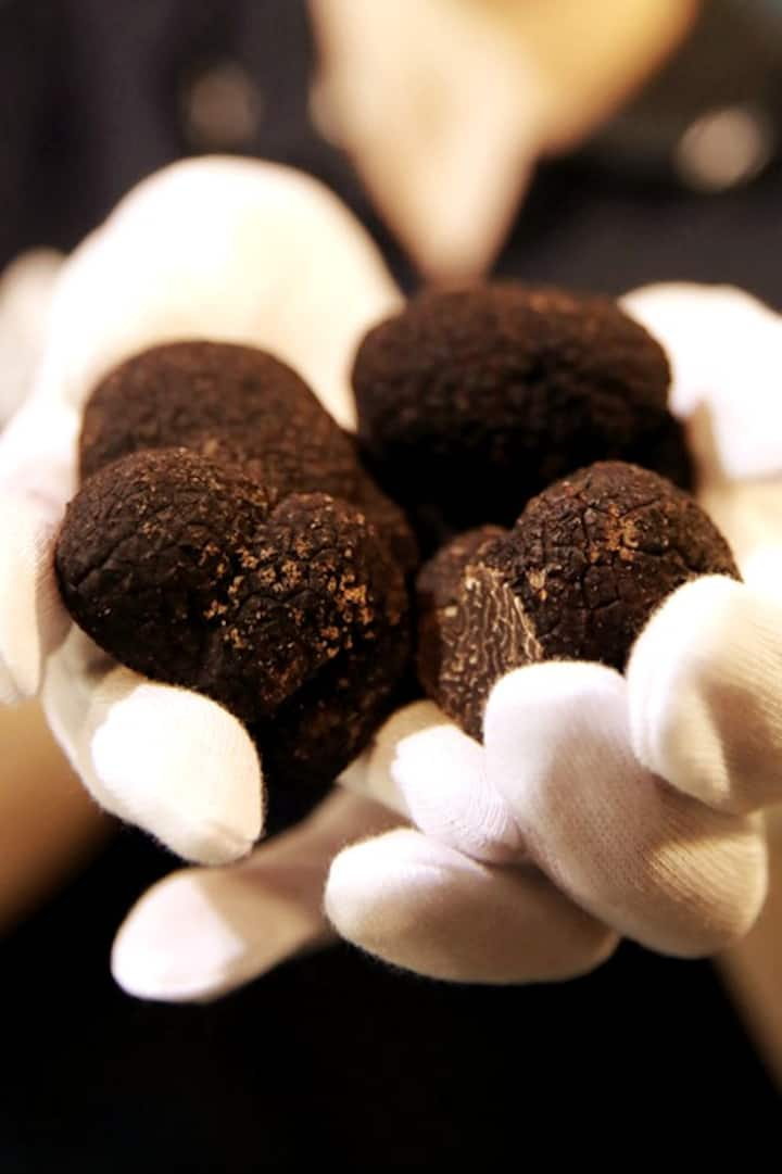 Truffles-  Chocolate or fungus?