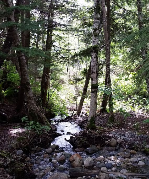 Where our house gets its name, the creek runs behind the house and is a soft summer trickle in summer to a raging torrent in winter.
