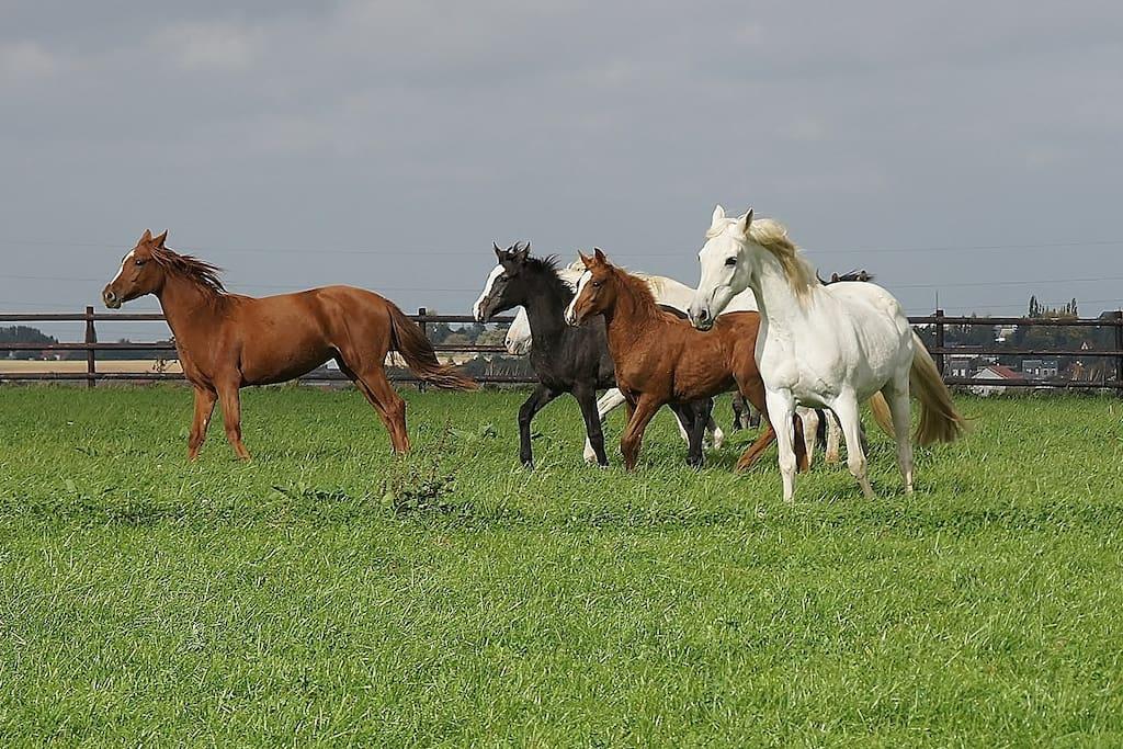 Nos chevaux d'élevage