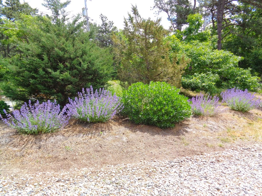Turning into the driveway you will see the well established plants